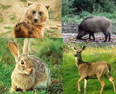 Izquierda-Ezkerra pregunta al Gobierno de Navarra por medidas para controlar el aumento de la fauna salvaje