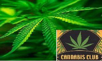 I-E solicita de nuevo la despenalización del consumo y la tenencia para el consumo propio del cannabis