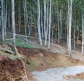 Izquierda-Ezkerra exige al Gobierno de Navarra que impida la tala de hayas en Zilbeti
