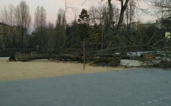 El Ayuntamiento de Pamplona prescinde de sus propios recursos para solicitar un informe sobre la caída del árbol de Trinitarios